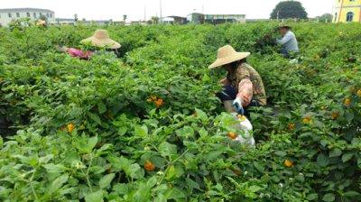 看中化农业MAP战略如何服务农业?