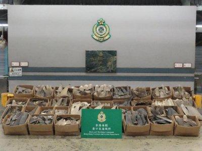 香港海关检获502公斤疑受管制属濒危物种干鱼翅