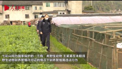 四川丹棱:查处涉野生动物案件8起 收缴活体770只